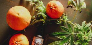 Cannabisolie som kosttilskud - Er det en god ide?